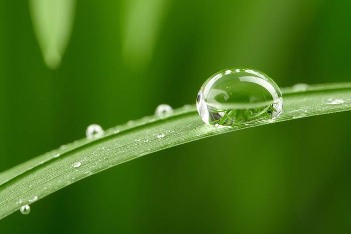 drop-on-grass