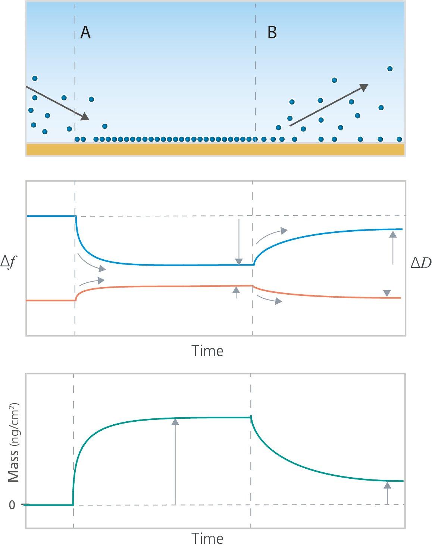 Adsorption and desorption analysis