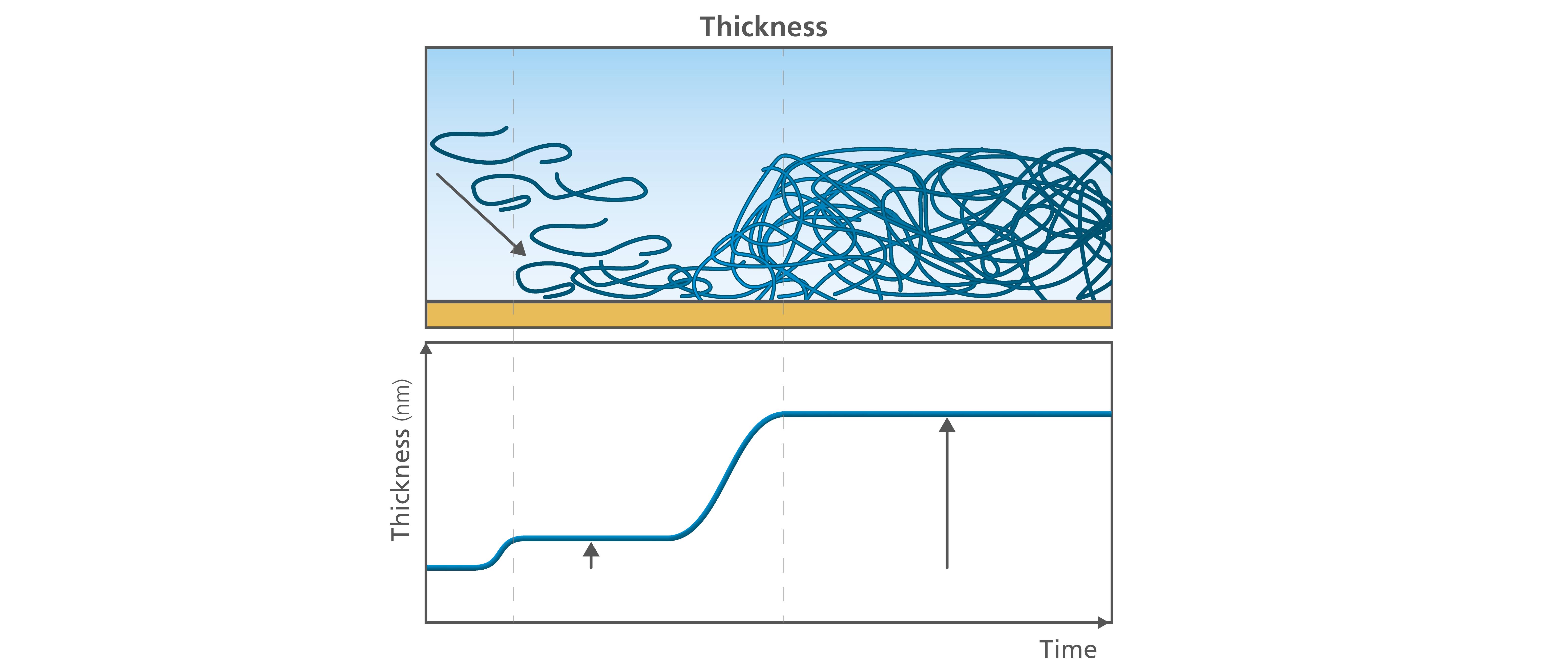 Fig 2. QSense Thickness