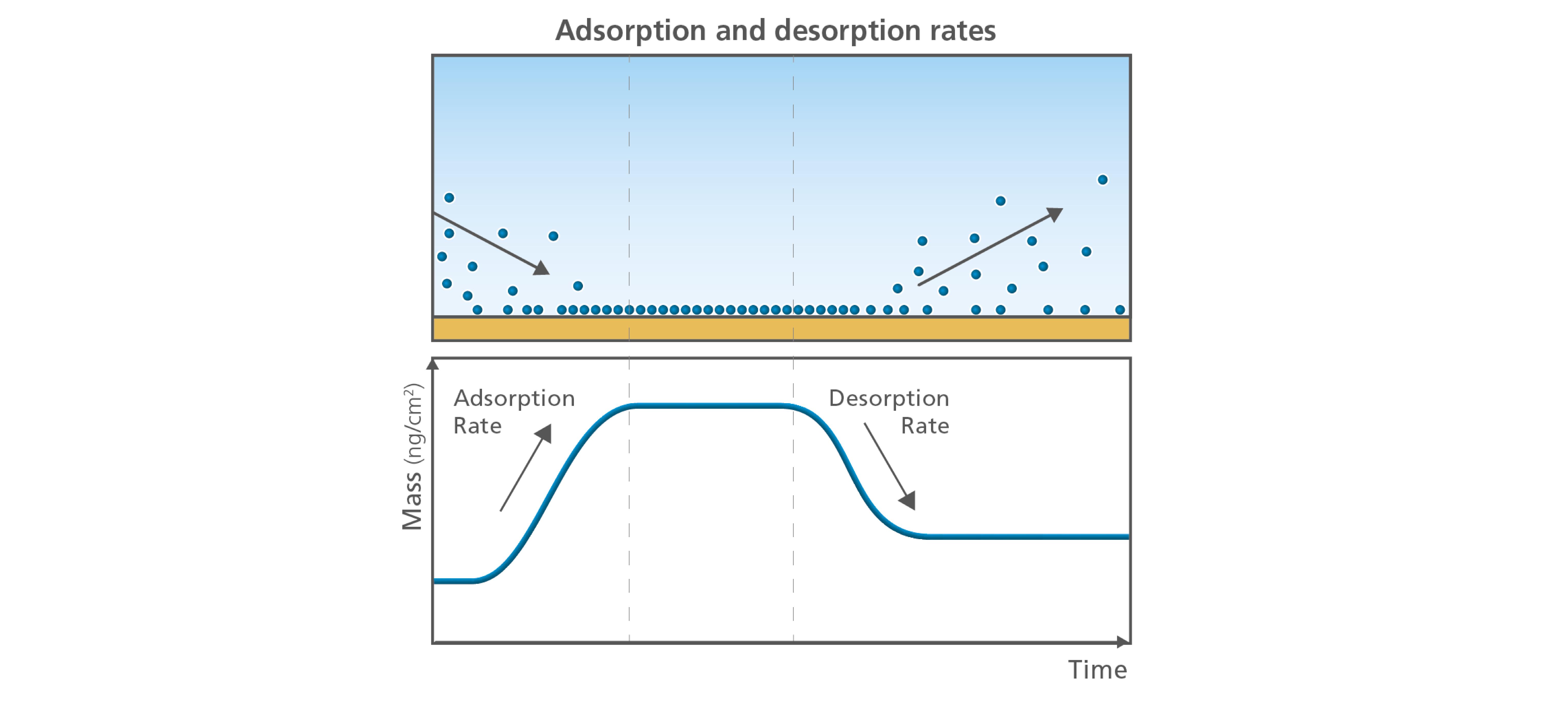 Fig 4. QSense Adsorption-Desorption