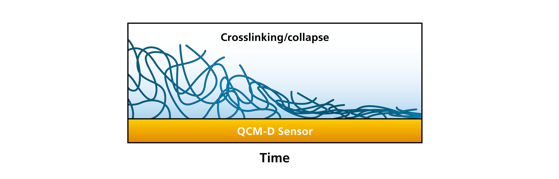 Fig 8. QSense Crosslinking_Collapse