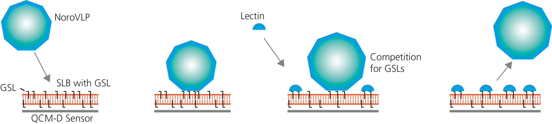 Fig Illustration NoroVLP