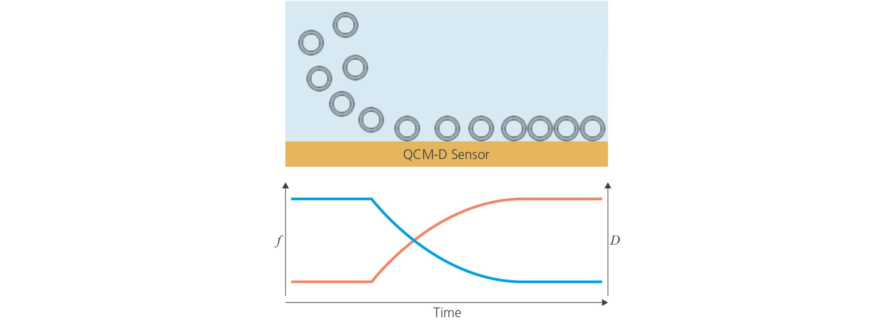 Vesicles adsorption by QCM-D