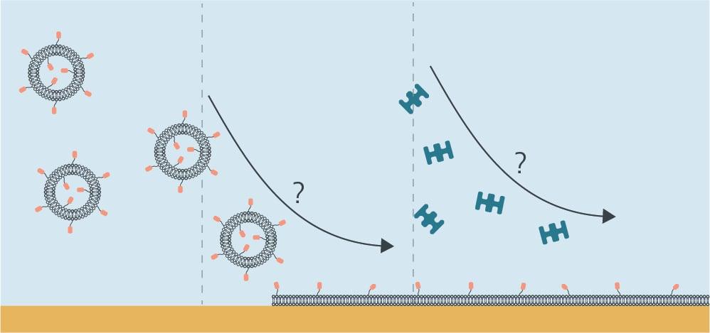 Analyze lipid-based systems with QCM-D