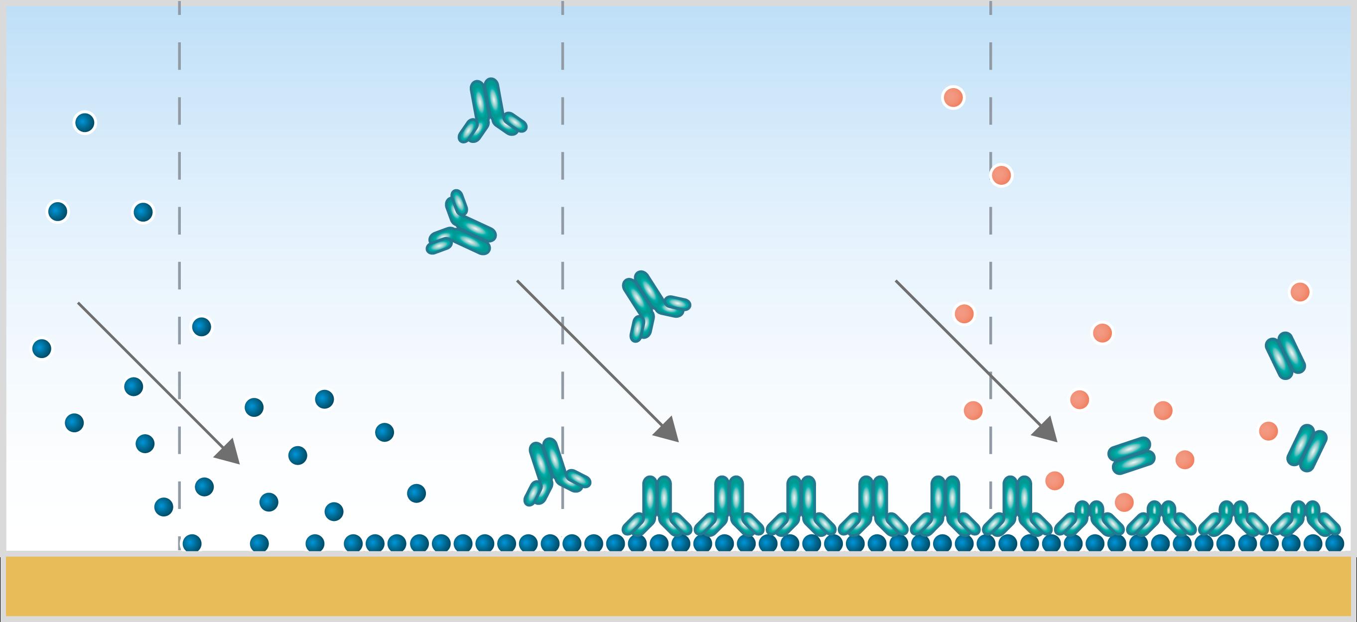 Analyze biomolecular interactions with QCM-D