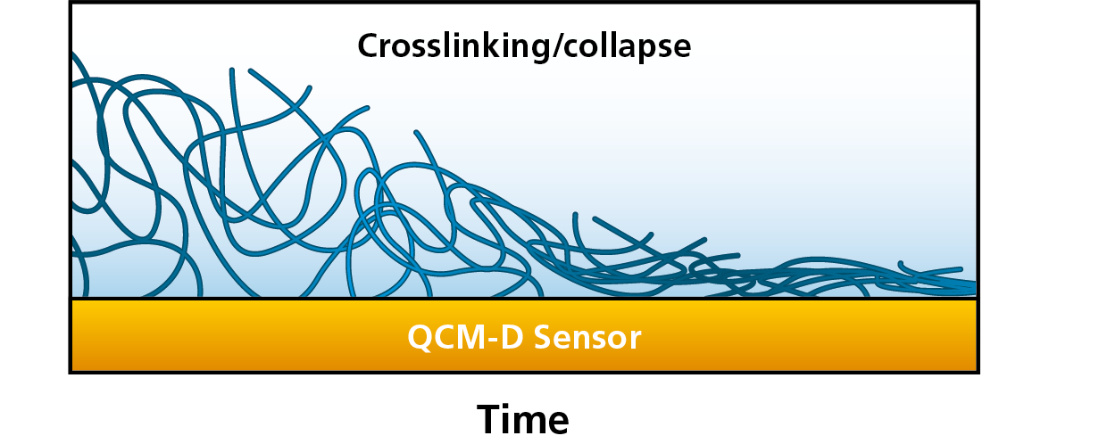 Q-Sense_Crosslinking_Collapse.png